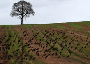Birds fly across a field on the planned route of the new HS2 high speed rail link near Polesworth, Warwickshire.
