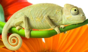 a85654d52458b Readers recommend: songs about reptiles | Peter Kimpton | Music ...