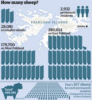 Sheep on the Falkland islands