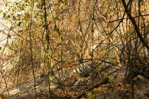 Week in wildlife: Art Wolfe Wheres Wildlife