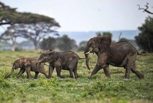 Week in wildlife: Picture taken on December 30, 2012 shows