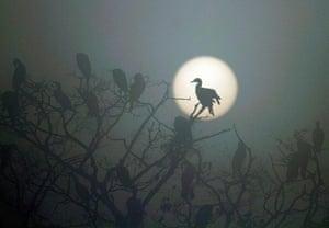 Week in wildlife: Birds in Nepal