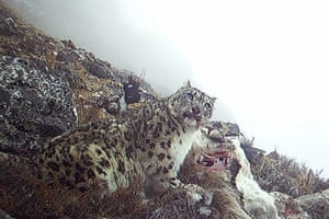 Week in wildlife: To go with 'Nepal-wildlife-conservation-