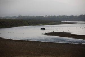 Week in wildlife: A rhino crosses the Rapti River at Sauraha in Chitwan