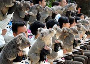Koalas and handlers pose for photos at Chimelong Safari Park in Guangzhou, China. The park has successfully bred more than 20 koalas since it imported six koalas from Australia in 2006.