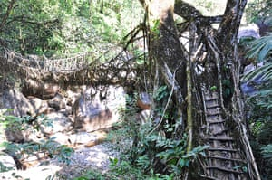 Meghalaya: The villagers have built bridges from living tree roots