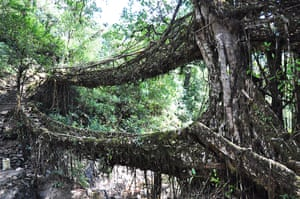 Meghalaya: But the living root bridges are at least as sturdy.