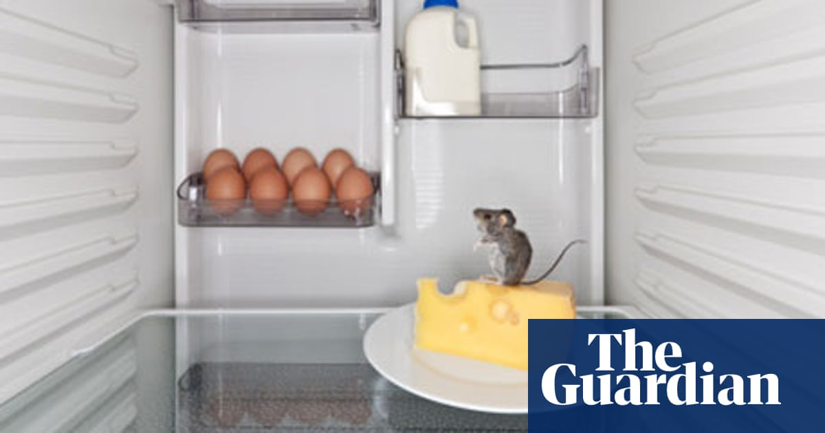 Mice invasion: don't panic!   Life and style   The Guardian