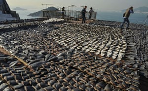 Week in wildlife: Shark fins drying on the roof of a factory building in Hong Kong