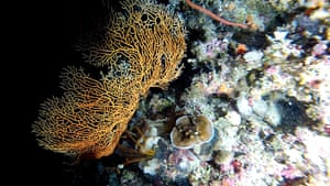 Week in wildlife: DEEPEST REEF CORAL EVER FOUND ON THE GREAT BARRIER REEF