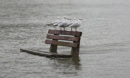 Flood and seagulls