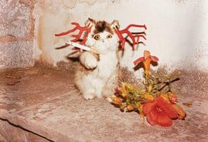 Juergen Teller: Cat smoking