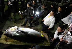 tuna: The bluefin tuna is carried to the Sushi Zanmai restaurant
