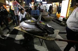 tuna: Kiyomura Co's employees push a cart carrying the 222kg fish