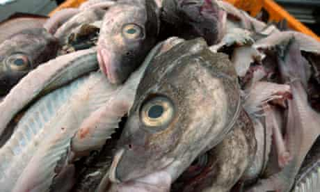 Cod in Grimsby