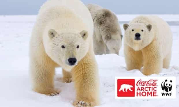 WWF and The Coca-Cola Company Team Up to Protect Polar Bears
