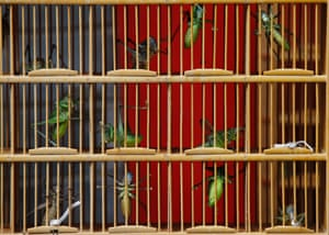 Bush crickets, which are sold as a pets for their chirping sound, are kept in a cage as they are displayed for sale at an insect market in Beijing China.