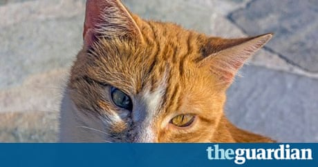 Stray Ginger Cats The Pros And Cons Of Taking One In