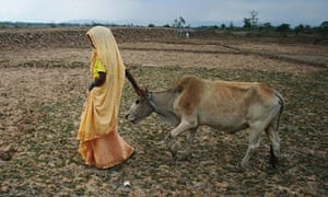 The long hours spent tending cows by Indian women are financially disadvantageous, economists have c