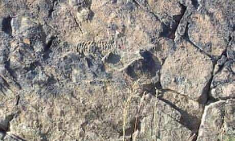 Ediacaran fossil at Bradgate Park