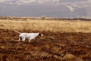 Dog Photographer: doga at work