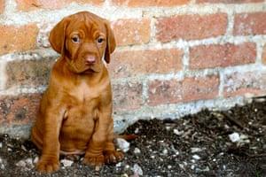 Dog Photographer: puppy