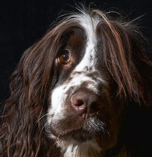 Dog Photographer: portrait