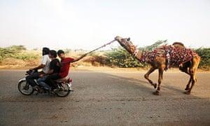 Eid animal slaughter in Pakistan