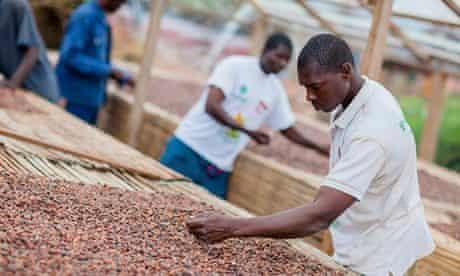 Cocoa beans solar drier