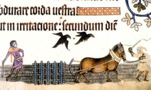 Ploughing in the 14th century from the Luttrell Psalter.