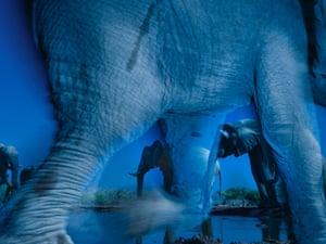 Essence of Elephants by Greg du Toithot