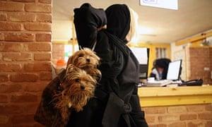 Iran dogs