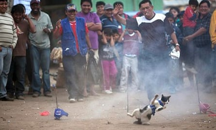 The cat race during the Curruñao festival