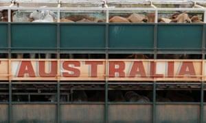 Live exports cattle Australia Indonesia