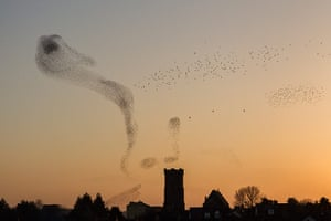 Landscape photography: starlings