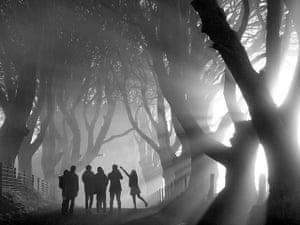 Landscape photography: sunlit wood