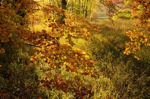 Landscape photography: autumn leaves and grass