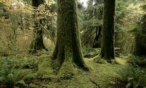 Evergreen forest Washington