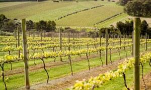 Victorian vineyards