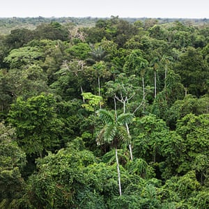 Trees of the Amazon : Aerial view of the Amazon rainforest
