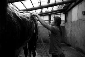 "Fukushima horses: ""After the accident, my family fell apart. My daughter tried to commit suic"