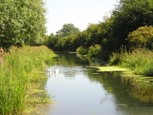 Great Nature Watch: Pocklington Canal