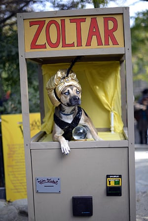 Halloween pets: A dog dressed as a Zoltar fortune telling machine at the 23rd annual Tompkins Square Halloween dog parade in New York City