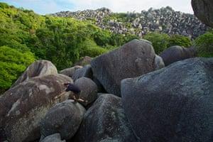 New species of Queensland: Conrad Hoksin explores