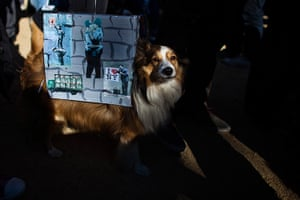Halloween pets: A dog dressed as Banksy murals takes part in the 23rd annual Tompkins Square Halloween dog parade in New York