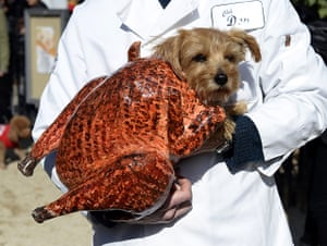Halloween pets: A dog dressed as a turkey participates in the 23rd annual Tompkins Square halloween dog parade in New York City