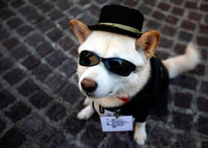 Halloween pets: Mr CB takes part in a Halloween parade in Kawasak