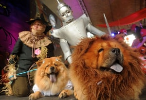 Halloween pets: Pet owners and their pet dogs dressed as characters from the Wizard of Oz p