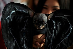 Halloween dogs: A dog dressed as a devil during the Scaredy Cats and Dogs Halloween costume competition in Manila, Philippines