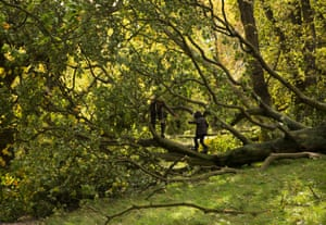 A fallen tree on Hampstead Heath provides an instant adventure playground after the St Jude storm abates.